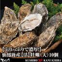 【ぷりっぷりで濃厚!】仙鳳趾産【活】牡蠣(大)10個...