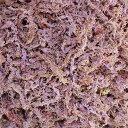 カラー山苔 モスパープル