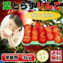 【送料無料】青森りんご 葉とらずつがる 3kg 中玉サイズ(10-12玉前後)≪ご家庭用 サンつがる つがる りんご≫