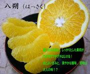 和歌山産 はっさく 10kg 3,980円   【送料無料・一部地域除く】
