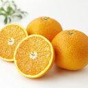 清見オレンジ 5kg 3800円 贈答用