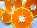 ギュッと味が濃縮 本場紀州和歌山の小粒みかん  5kg 2,480円【送料無料】