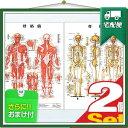 「検査」医道の日本社 人体解剖学チャート骨格筋 ポスター 2枚セット(骨格筋・骨格) パネルなし 『プラス選べるおまけ付』