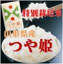 【新米 28年産】【送料無料】【生産者限定特別栽培米】山形県河北町産 つや姫 白米 10kg(5kgx2)