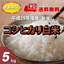 【★】徳島県産 米 こしひかり 5kg【送料無料!一部地域を...