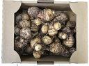 訳あり 里芋 2kg 新潟産 堀川農園 新鮮野菜 里芋