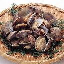 あさり殻付きL500g(40〜50粒) 貝類 魚介類食材 【...