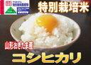 【送料無料】真珠のような炊きあがりが自慢!!山形県米沢置賜産 コシヒカリ 10kg【smtb-k】【w2】05P22feb11