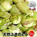 天然ふきのとう1kg 秋田産 採りたてをクール便にて発送 フキノトウ ばっけ 天然山菜