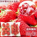 イチゴ農家さんからの直送品紅ほっぺ 完熟大粒サイズ2パック〜国産 いちご イチゴ 無添加 送料無料
