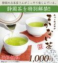 ティーライフのまかない茶ポット用100個入【お茶/...