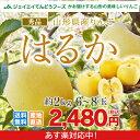 りんご 送料無料 秀品 JAてんどう 山形県産りんごはるか 約2kg(玉数おまかせ) ※一部地