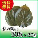 【柿の葉塩漬け(大) 50枚×30束】丁寧に選別、塩漬けされた柿の葉