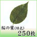 【桜の葉塩漬け(緑) 250枚】丁寧に選別し、塩漬けされた桜の葉