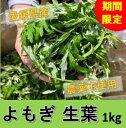 【よもぎ】【生葉】 1kg 愛媛産 農薬不使用 期間限定 手摘み 天然 フレッシュ