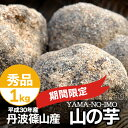 希少 山芋 山の芋 丹波 丹波篠山産 1kg 秀品 箱入り 季節限定 ギフト