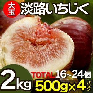 淡路いちじく イチジク 生 無花果 2kg 500g×4パック 16〜24個入り 淡路島産