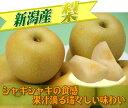 自然の恵みをたっぷり受けた甘い秋の味覚!!新潟産 梨  【ご家庭用】 5kg 発送時期によって品種及び玉数が異なります。