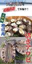 【送料無料】 天然物 活きアワビ 1kg 活き サザエ 1kg 玄界灘 壱岐産 獲れたて直送!!