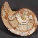 【化石】古生代アンモナイト化石 2個一組