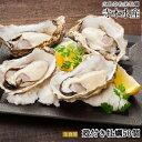 広島牡蠣老舗の味!殻付き牡蠣50個[生食用]