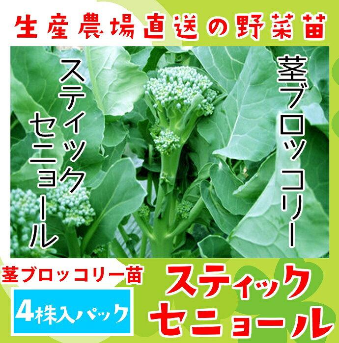 茎ブロッコリー苗 スティックセニョール