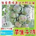 【生産農場直送】芽キャベツ苗 早生小持  4株入りパック 葉...