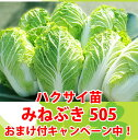 みねぶき505ハクサイ苗 9cmポット 【野菜苗】【ガーデニング】【家庭菜園】10P18Jun16白菜