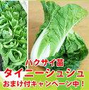タイニーシュシュハクサイ苗 9cmポット 【野菜苗】【ガーデニング】【家庭菜園】10P18Jun16白菜
