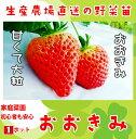 【てしまの苗】イチゴ苗 おおきみ 9cmポット 【人気】