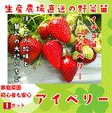 【秋植えイチゴ苗】 アイベリー 9cmポット 【人気】