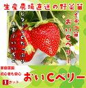 【生産農場直送】 おいCベリー 9cmポット 【人気】