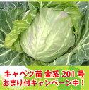 金系201号キャベツ苗 9cmポット【野菜苗】【ガーデニング】【家庭菜園】10P18Jun16