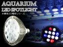 交換球 LED スポットライト 白8青2赤2 照射角60度 水槽用照明 LED照明 LEDライト 【アクアリウム 熱帯魚 淡水魚 海水魚 水草 サンゴ イソギンチャク ミドリイシ シャコガイ 観賞魚 水槽 レイアウト】