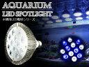 交換球 LED スポットライト 白6青6 照射角60度 水槽用照明 LED照明 LEDライト 【アクアリウム 熱帯魚 淡水魚 海水魚 水草 サンゴ イソギンチャク ミドリイシ シャコガイ 観賞魚 水槽 レイアウト】