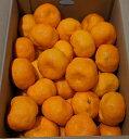 愛媛県産 ハウスみかん 大 5kg 無地 |86069:フルーツ・果物