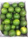 徳島県産 すだち 1kg 無地 L〜3Lサイズ18039:野菜