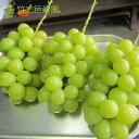 シャインマスカット 2kg(家庭用) 愛媛県産 竹内巨峰園 発送期間 8月下旬から9月上旬 85169:フルーツ・果物
