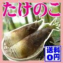 【たけのこ 朝掘り 2kg(2〜5本)送料無料】山形県産 孟宗 筍 タケノコ 竹の子 山菜
