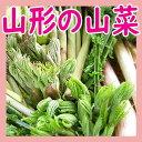 【母の日】【おまかせ天然 山菜 セット1kg送料無料】山形県...