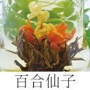百合仙子(お花の工芸茶)
