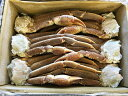 生ズワイガニ バルダイ種 5kg セクション (高級 大ズワイ 業務用 送料無料)