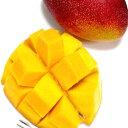 完熟マンゴー(かんじゅくまんごー)大玉 2Lサイズ 1玉 簡易箱 宮崎産○店長おすすめ果物です初夏の高級フルーツ 甘いトロピカルフルーツの女王です☆ 甘い アーウィン種 アップルマンゴー