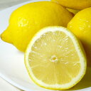 レモン 中玉  アメリカ・チリ産 約3kg 中玉 24個入り 外国産 黄色いレモン【140】【ラッキーシール対応】