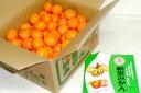 和歌山産 「有田」 新堂みかんMサイズ10kg(93個前後入り)○ご贈答おすすめ果物です深いコク、切れいい味、本格派!「有田」の高級ブランドです