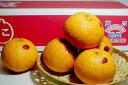 和歌山産 有田 田口「的兵(まとひょう)」デコポン 大玉15個入り○店長おすすめ果物です0222春先2