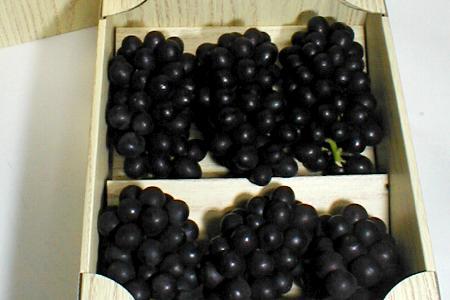 キングデラぶどう 約1kg(5〜6房前後入り)化粧箱 山梨産 ブドウ 葡萄○ご贈答おすすめ果物です
