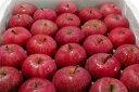 いかりりんご「超新鮮!ふじ」青森産 5kg(20〜25個入り前後)〔店長おすすめ果物です〕