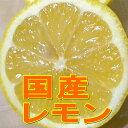 【お試し 送料無料】(レモン れもん 檸檬)国産 レモン Mサイズ 約2kg(16個前後入