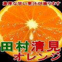 オレンジ おすすめ ワックス